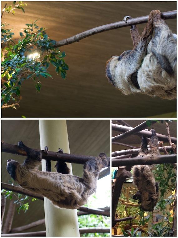 dresden_faultiere im zoo_hamburgvoninnen