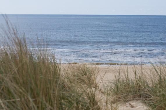 sylt strand gras