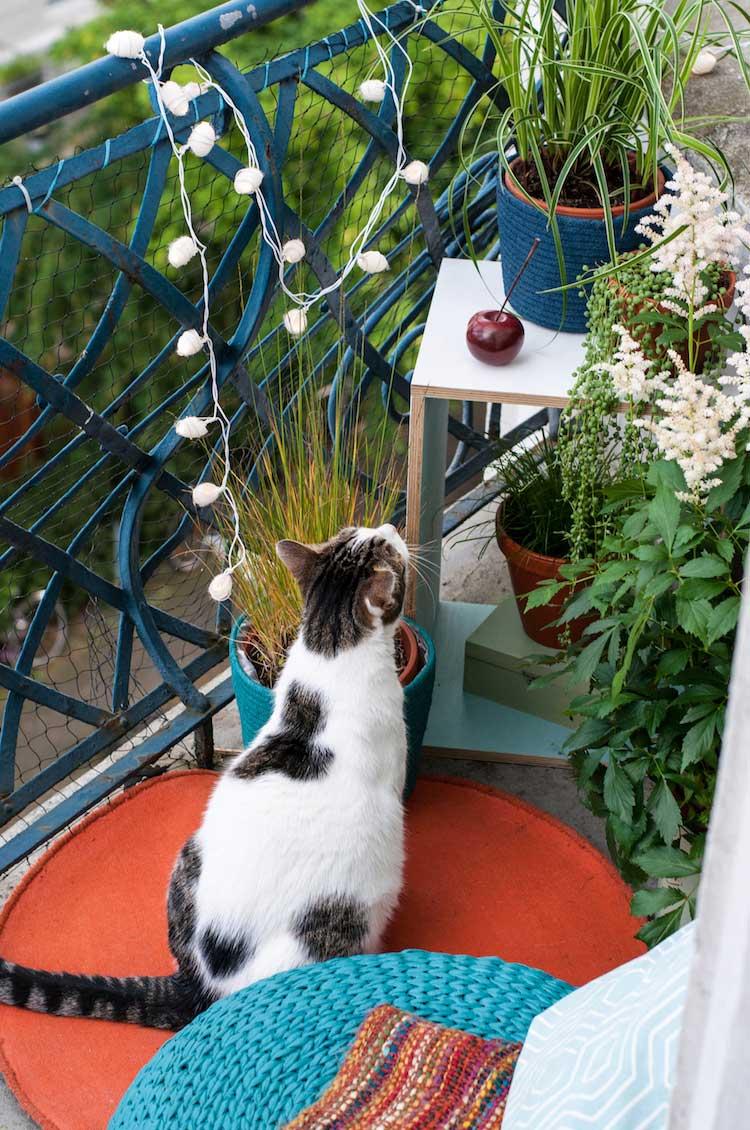 Katze - Tipps fuer kleine Balkone - Outdoor Oase