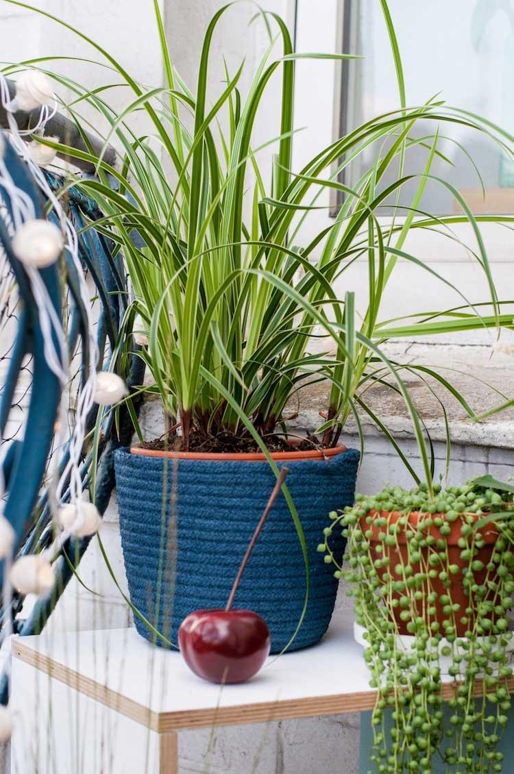 Pflegeleichte Balkonpflanzen - Outdoor Oase - hamburgvoninnen.de