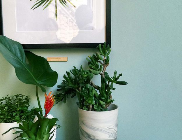 Wohntrends: Urban Jungle im Etsy Showroom, hamburgvoninnen.de